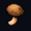 Mushroom SC2LotvEmoticon