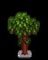 Гранатовое дерево 4