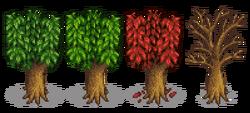 Персиковое дерево 5