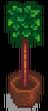 Топиарное дерево