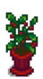 Комнатное растение 7