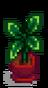 Комнатное растение 5