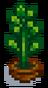 Комнатное растение 12