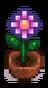 Сезонное растение 13