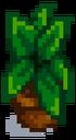 Комнатное растение 15