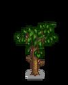 Абрикосовое дерево 4