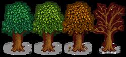 Гранатовое дерево 5