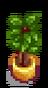 Комнатное растение 10