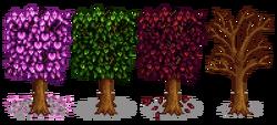 Вишнёвое дерево 5