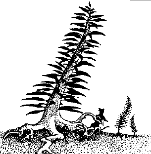File:Peacock tree.png