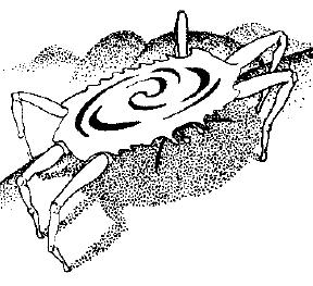 File:Spinning crab.png