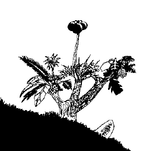 File:Nid berry bush.png