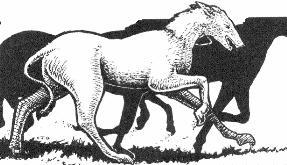 Tomar's Horses