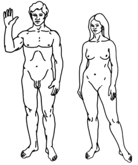 HumanDiagram