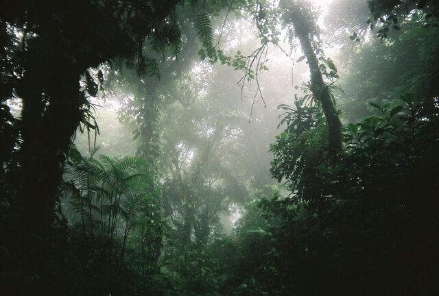 File:Rainforest by skoora.jpg