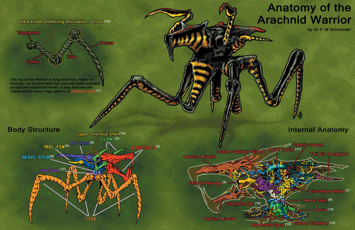 Image - Anatomy of the Arachnid Warrior.png | Starship Troopers Wiki ...