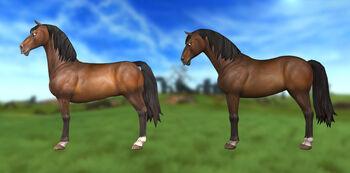 Starterhorse2