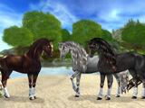 Frisisk sporthäst