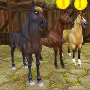 Morgan hästarna