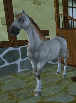 Sso hästar