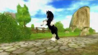 Trailer inför Tinkerhästarna
