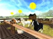 Horsemarket fp