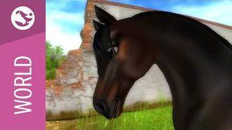 Star Stable World - Morgan Horse