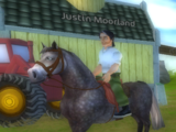 Justins häst