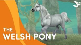 Star Stable Teasers - The Welsh Pony