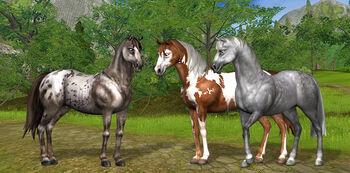 Starterhorse3