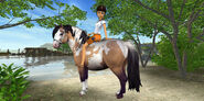 Pony347b