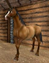 Donhäst