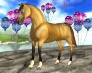 Morganhästen i SSO