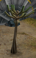 Eucalymus.png
