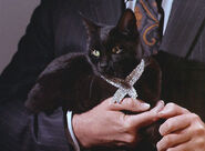 Isis-Cat