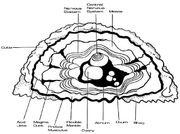 Janus hominidae physiology