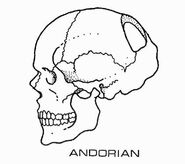 Andorian skull diagram