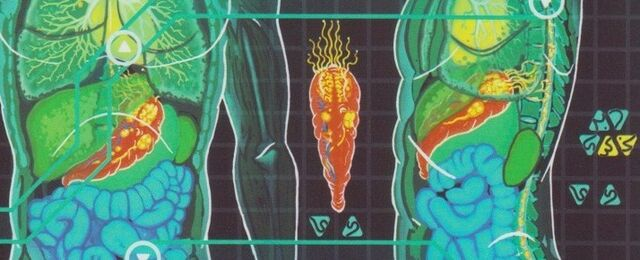 File:Joined Trill internal anatomy.jpg