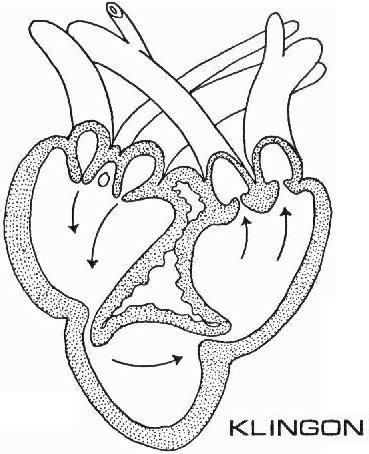 Image klingon heart diagram 23rd centuryg memory beta fileklingon heart diagram 23rd centuryg ccuart Images
