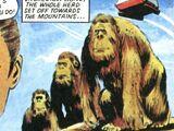 Zeltok gorilla