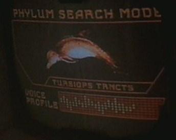 Atlantic bottlenose dolphin   Memory Beta, non-canon Star