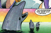 DoH-dolphins