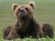 Bear cub small