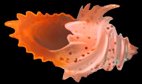 File:Calamarian horn.png