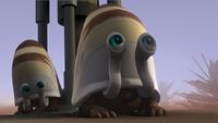 Atollon Snail