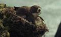 Porg nest.png