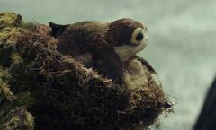 Porg nest