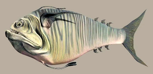 File:Doo scalefish.png