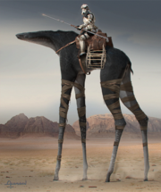 Jedha Camel