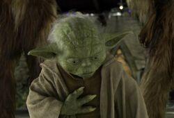 Yoda heartache